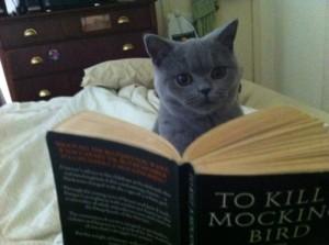 El gato lector