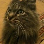 El gatito Beakman